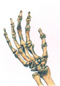 Hand Bones, copyright 1997 Michael D. Smith